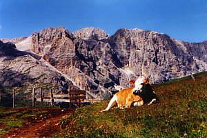 Auf dem Fr. August-Weg zur Vajoletthütte (2243m) – 29.06.2000